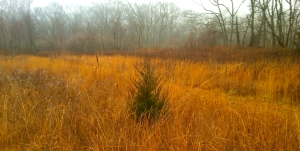 """Christmas Tree """"in the rough"""""""