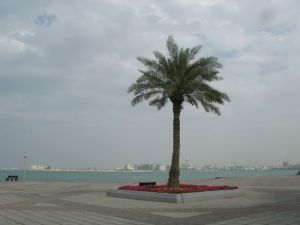 Palm tree on the Corniche, Museum in the distant background