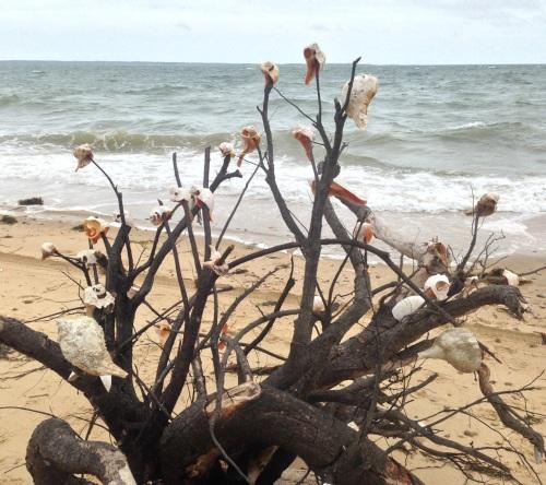 Decorated Roots (East Hampton NY)