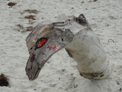 Beach Dragon (Arcata CA)