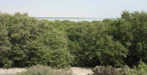 Mangrove forrest